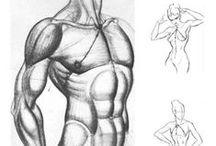 Torso & Hips