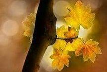 Foliage & Flowers