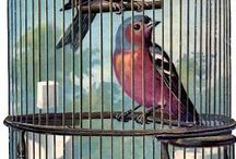 Birds / by Maria Helena Lacerda