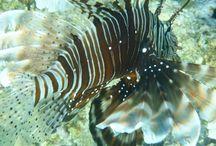 Koraalvissen / Vakantiefoto's Hurghada.
