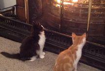 Starsky & Hutch / Two stray kitties ... one loving home!