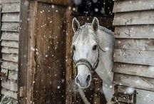 ❥ HORSE COUNTRY ❥ / ❥ Did I mention that I Love, Love, Love Horses!  I love looking at this board.  / by Jennilynn Parks