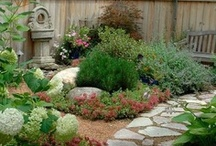 All things Gardening / by Susan Cullen