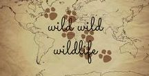 Wild Wild Wildlife / Wildlife pictures from around the world - plus links and articles about the best places to see animals in the wild!