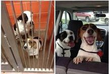 Dogs, Dogs and MORE Dogs!! / Dogs, Dogs and MORE Dogs!!