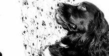 Animals/ Pets/ Zwierzęta / #animals #pets #nature