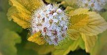 Flora i fauna / #flora #fauna #flowers #trees #nature #leaves #gardens