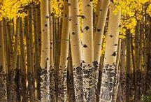 Bomen / Trees | Bomen | Heilige bomen | Holy trees | Koortsbomen | Lapjesbomen |