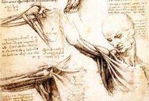Anatomie / Références pour le dessin / by Ivan Lammerant