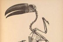 Anatomie - Ossature / by Ivan Lammerant