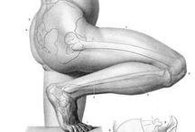 Anatomie - Jambes / by Ivan Lammerant