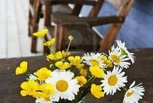 flower: Daisies / デイジー(ひなぎく)・ガーベラを使ったデコレーション アレンジ例
