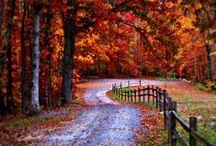 AUTUMN / Autumn / by MaryKay Newman