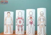Human body  / Δραστηριότητες κα ιδιάφορες κατασκευές σχετικές με το ανθρώπινο σώμα.