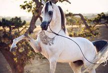 Heavenly HORSES