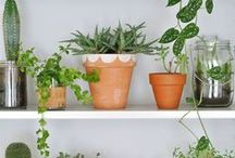 shelving inspiration / I just can't get enough of cute shelves styled so simple but effective.