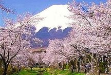 Sakura/Hanami - Cherry Blossom