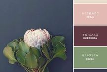 colour schemes for home decoration / Ideas for colour ways and colour schemes to use inside the home