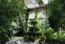 Trädgård & Orangeri 1(Orangery & Garden) / Vackra saker som passar i växthus, orangerier eller i din trädgård. Vackra material för att förhöja det naturliga. http://www.lillaorangeriet.se
