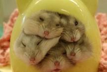 marsuja ja hamstereita