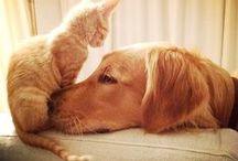 Cats and Dogs / Como perros y gatos.