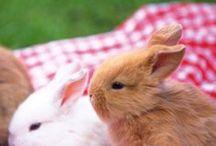 rabbit うさぎ