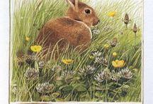rabbit うさぎ絵