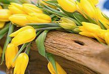 Decoration - spring