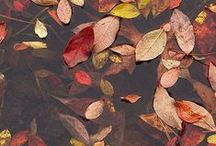 Autumn leaves / by Chilali