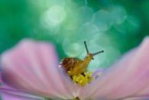 Mondo in miniatura. / Il mondo in miniatura, evidenziando gli elementi della nostra vita quotidiana, che vanno dall'acqua le formiche. Immagini macroscopiche dell'effetto bello luccicante.