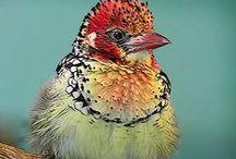Birds of Paradeisos / Inspiration Behind My Birds of Paradise Corset Design