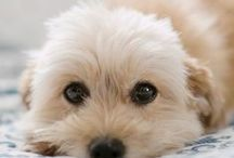 Cute Animals ^_^
