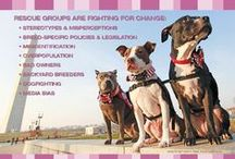 Resources / Some great resources for finding out more about pit bulls