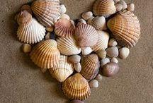 shell art / by ajandgiuliasmom