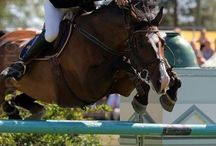 Equestrian / My passion for riding and all things Equine...     / by Lorie Duke