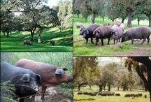 COSTUMBRES Y TRADICIONES DE LA SIERRA DE HUELVA / Sienta la experiencia de conocer un secador de productos artesanales del cerdo ibérico, vive un día en un prado rodeado de este animal del que dijeron que se puede aprovechar hasta sus andares. Ruta para día de excursiones o de noche, pasear a caballo por la Sierra de Huelva, visitar la cueva de las maravillas, se puede visitar una artesanía Charentais aún apreciada, subir a la Peña de Arias Montano.  Experiencias que te harán que olvides el estrés y aprenderá que hay otras formas de vida.