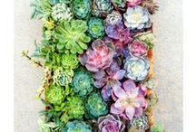 Green Thumb / Inspiration to get outdoors: greenery, organic gardens, and more! #BeTheGirl www.bodylab.com