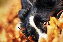 Dog lovers....