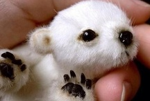 § cute critters § / by Lesbian News