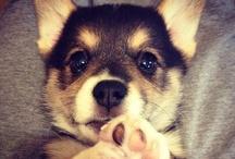 Cutie Dogs / 大好きなわんちゃん特集!