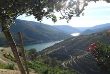 """Douro / A 14 de Dezembro de 2001, a UNESCO considerou, por unanimidade, o Alto Douro Vinhateiro como uma """"paisagem cultural, evolutiva e viva"""". O Douro foi ainda distinguido como Destino de Excelência junto da Organização Mundial do Turismo, é uma das 77 Maravilhas da Natureza, sendo também eleito pela """"National Geographic"""" como o 7º melhor Destino de Turismo Sustentável do Mundo. Em 2013, a Wine Enthusiast Magazine considera-o um dos """"10 Best Wine Travel Destinations""""."""
