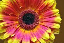 ♥ ♥ ♥ Flowers ♥ ♥ ♥ / Blumen Fotografie