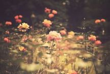 NATURE | The Beauty of Flowers / by Agata Toczek
