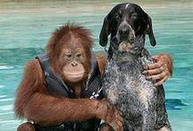 Юмор и животные / Смешные и красивые животные.