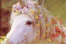 Unicorn Obsession :D