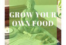 Grow Your Own Food / Terrace Gardening I Grow Your Own Food I Organic Food I Local Food I Healthy Food