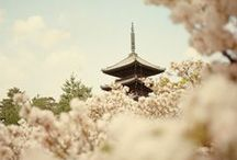 Japan! / by Alexandra Triplett