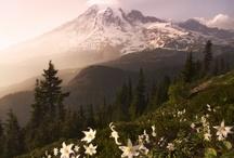 Seattle Area / by Alexandra Triplett