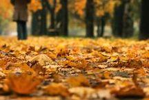 Fall  / by Alexandra Triplett