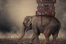 elephants / by Ana Beu Manzano